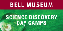 Bell Museum Science Discovery Day Camps